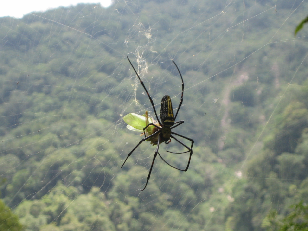 Spider in Taiwan
