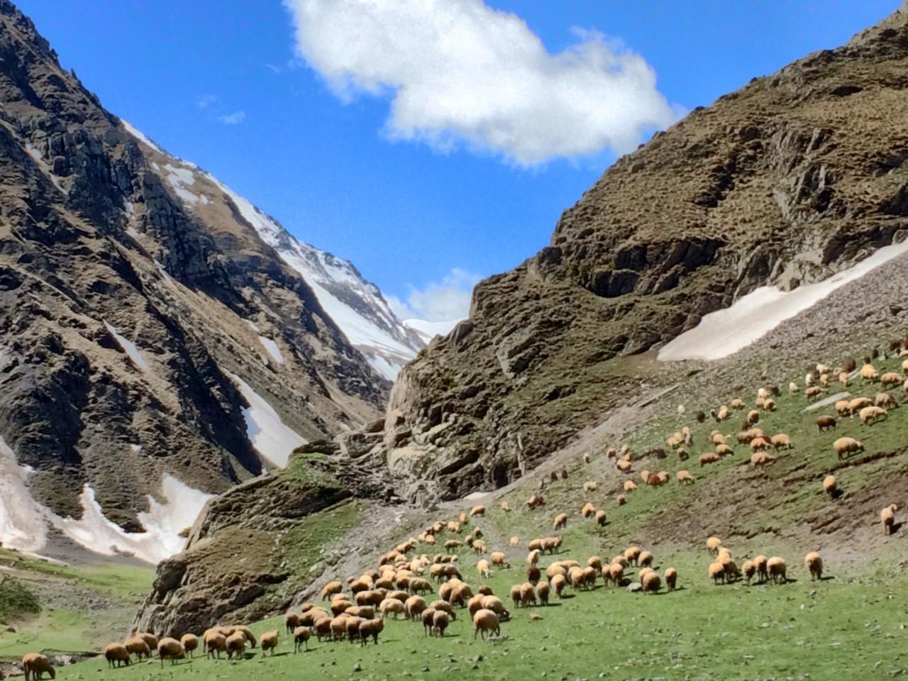 Khinalug mountains and sheep