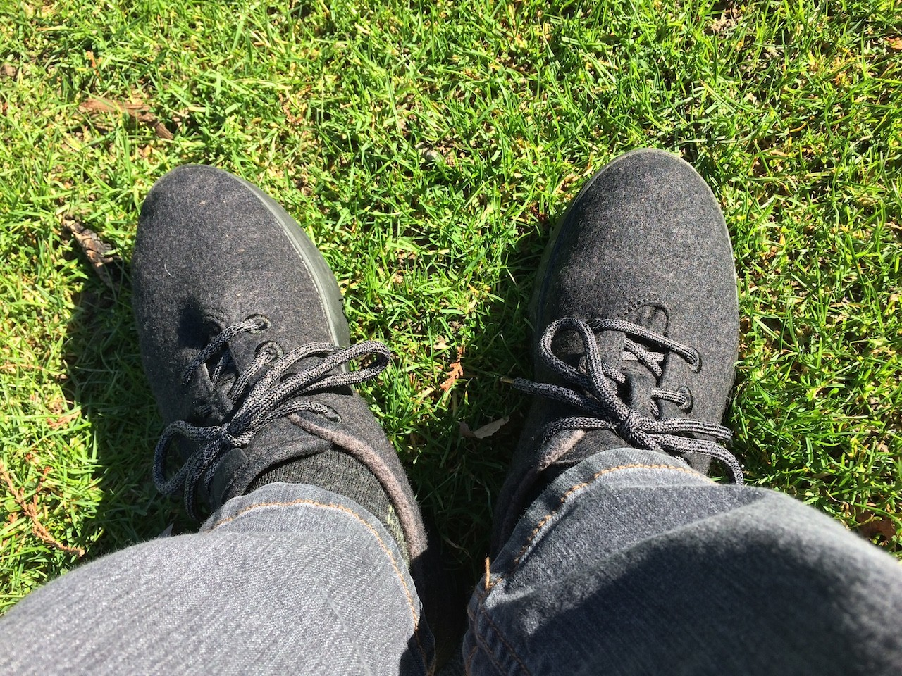 Allbirds lounging in the sun