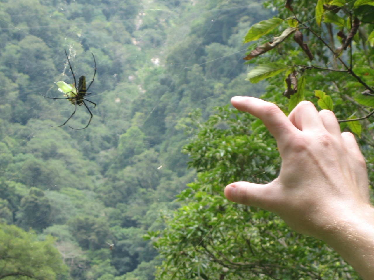 Spider scale Taiwan
