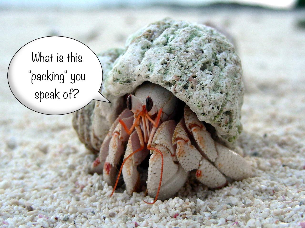 Minimalist hermit crab
