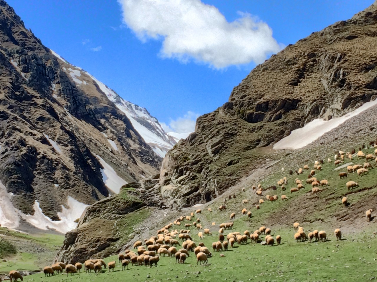 Khinalug mountains and sheep