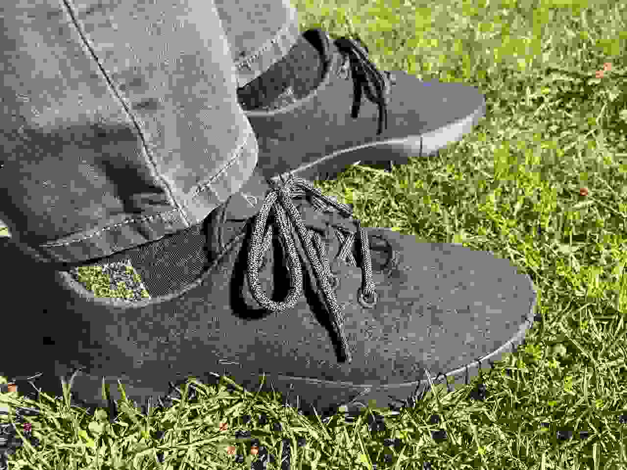Allbirds lounging in the grass